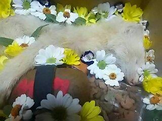 2016.7.11.ミルク亡くなる (7)