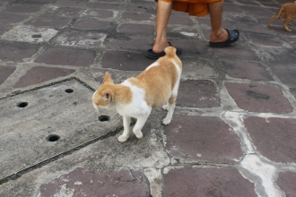00ワットポーの猫