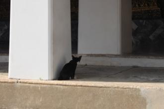 04ワットポーの猫