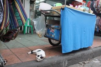 07カオサン通りの猫