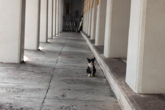 06ワットポーの猫