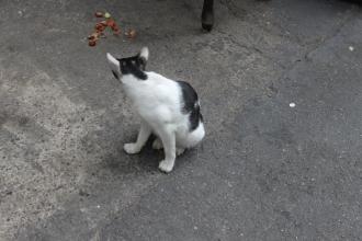10シャングリラそばの猫