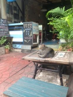 11バンコクホテル近所の猫