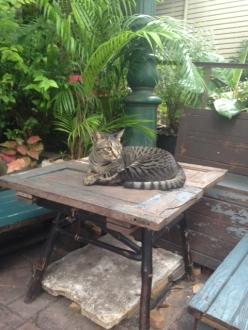 12バンコクホテル近所の猫