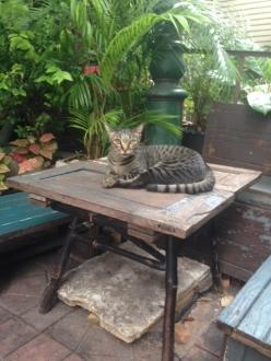 13バンコクホテル近くの猫