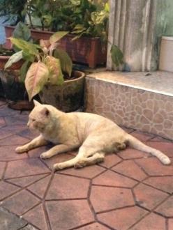 14バンコクホテルそばの猫