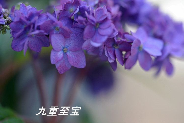 DSC_5800_01.jpg