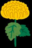 flower_kiku.png