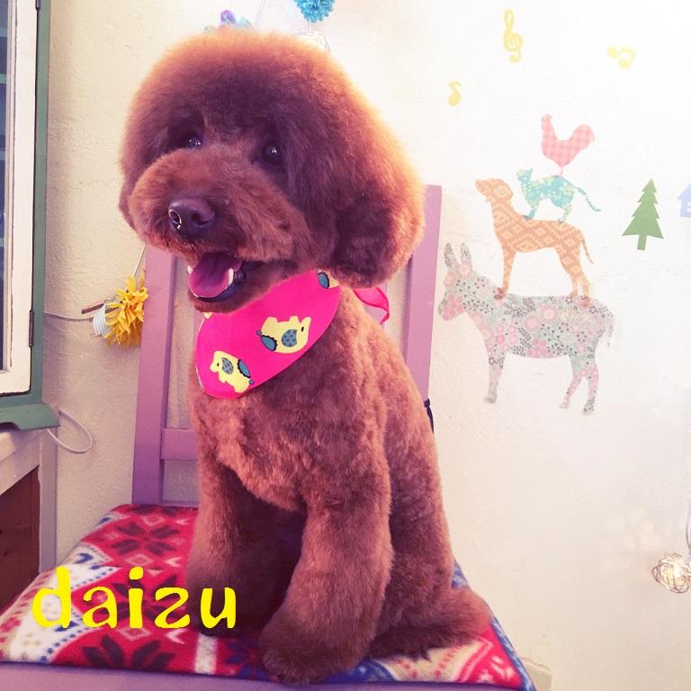 daizu 中野