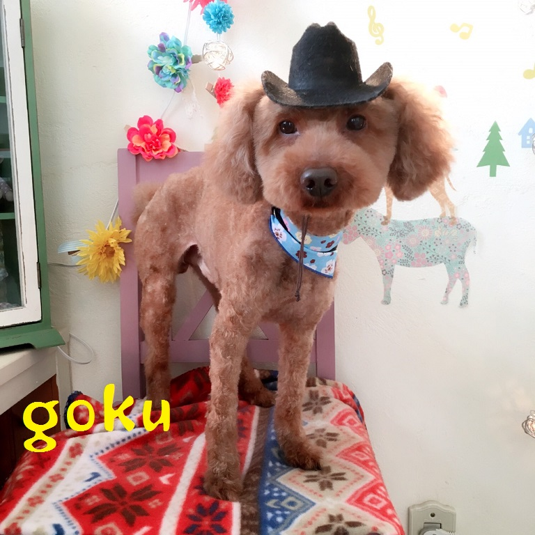 goku 三浦