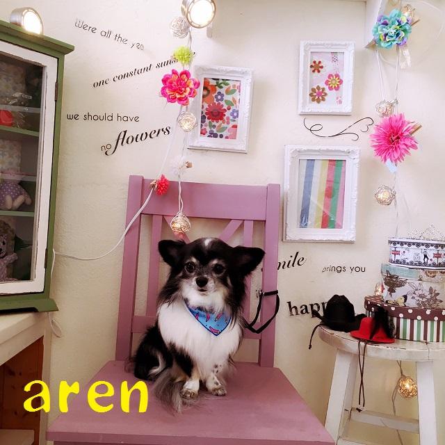 aren 藤井