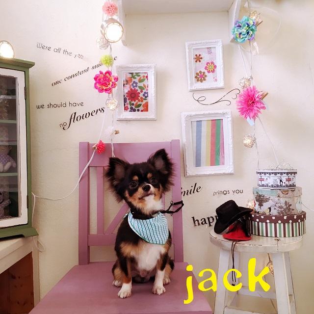 jack 橋本