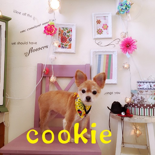 cookie 三島