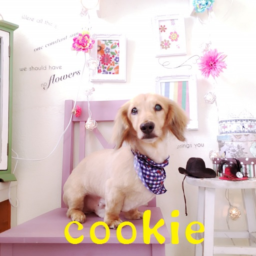 cookie 中田