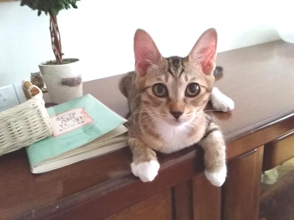譲渡会参加子猫さん