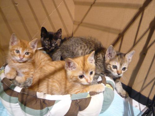 保護っ子4匹姉妹
