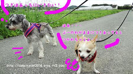 1607-miyoshi-wan1.jpg