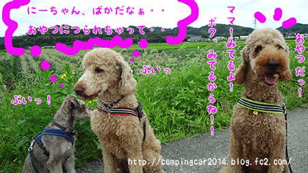 1607-miyoshi-wan2.jpg