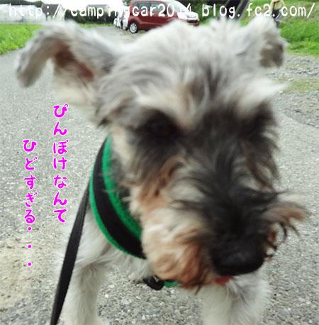 1607-miyoshiwan3.jpg