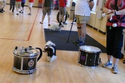 Dog around Drum
