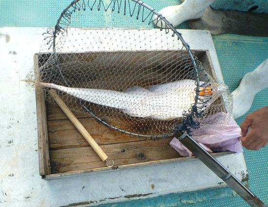 2016.08.08船釣り4