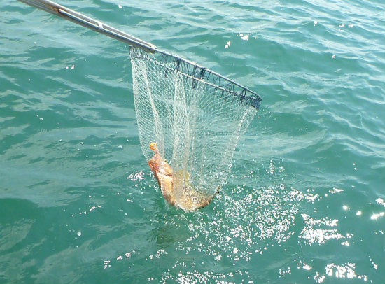 2016.08.08船釣り11