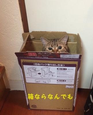 こてつビール箱