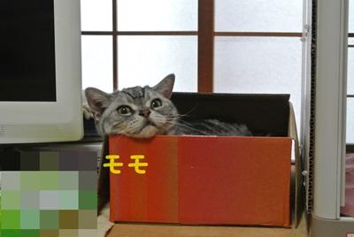 モモ様だって箱に入りますから