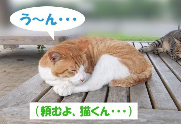 う~ん・・・ (頼むよ、猫くん・・・)