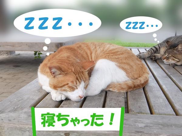 ZZZ・・・ 「寝ちゃった!」