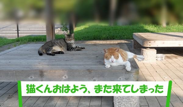 「猫くんおはよう、また来てしまった」