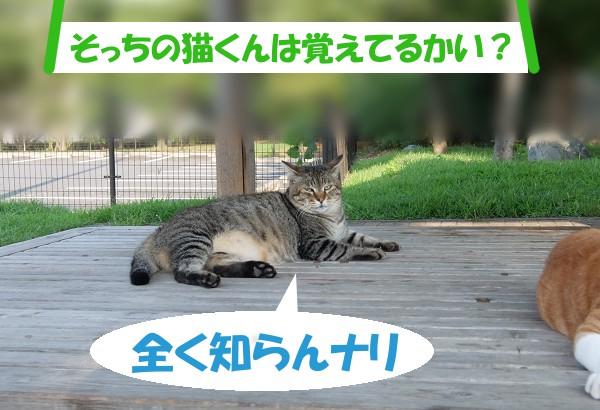 「そっちの猫くんは覚えてるかい?」 全く知らんナリ