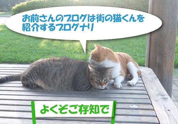 お前さんのブログは街の猫くんを紹介するブログナリ  「よくぞご存知で」