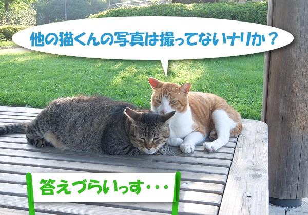 他の猫くんの写真は撮ってないナリか? 「答えづらいっす・・・」