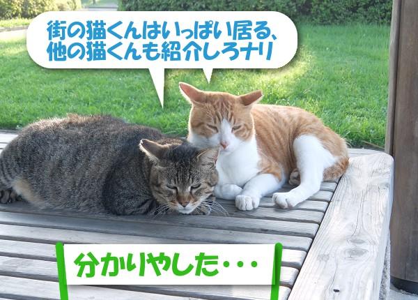 街の猫くんはいっぱい居る、他の猫くんも紹介しろナリ 「分かりやした・・・」