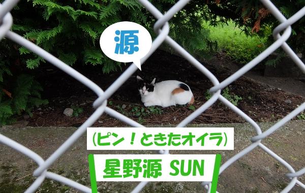 源 (ピン!ときたオイラ) 「星野源 SUN」