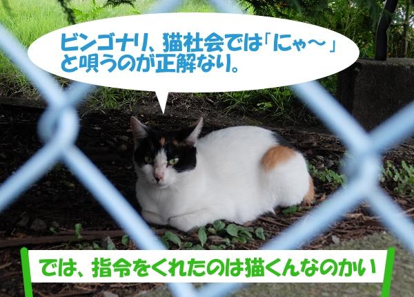 ビンゴナリ、猫社会では「にゃ~」と唄うのが正解なり 「では、指令をくれたのは猫くんなのかい」