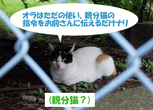 オラはただの使い、親分猫の指令をお前さんに伝えるだけナリ  (親分猫?)