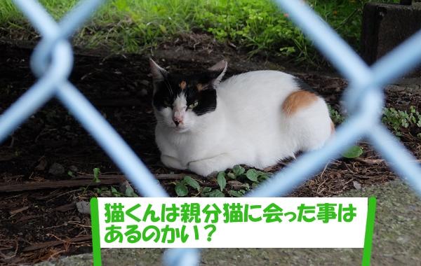 「猫くんは親分猫に会った事はあるのかい?」