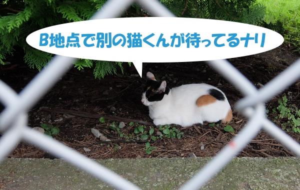 B地点で別の猫くんが待ってるナリ