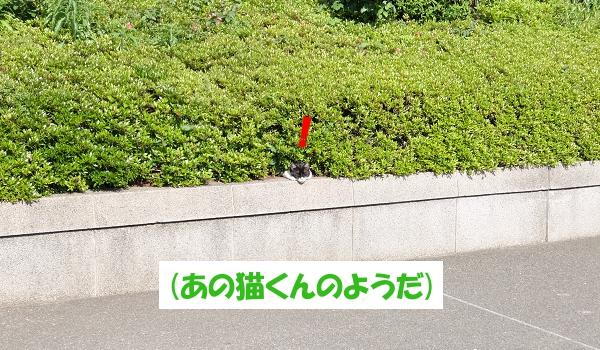 (あの猫くんのようだ)