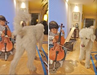 cello4_201608111930341d1.jpg