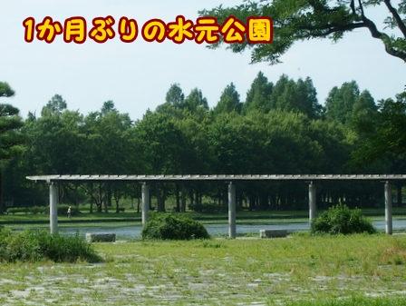 P7186845a.jpg