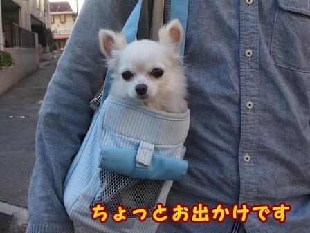 blog7384a.jpg