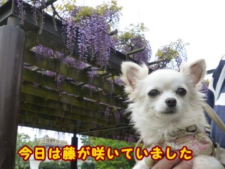 blog7470a.jpg