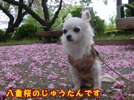 blog7484a.jpg