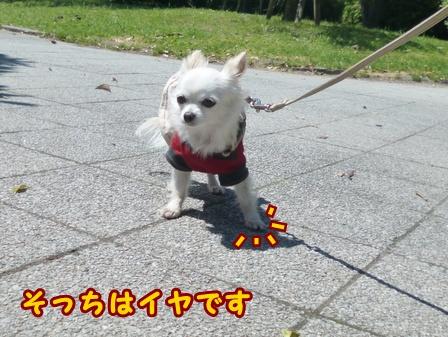 blog7499a.jpg