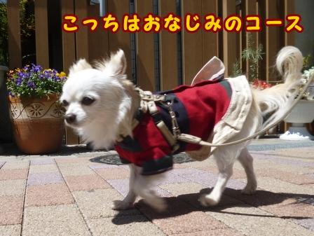blog7501a.jpg