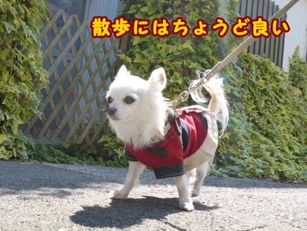 blog7509a.jpg