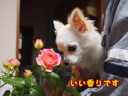 blog7528a.jpg
